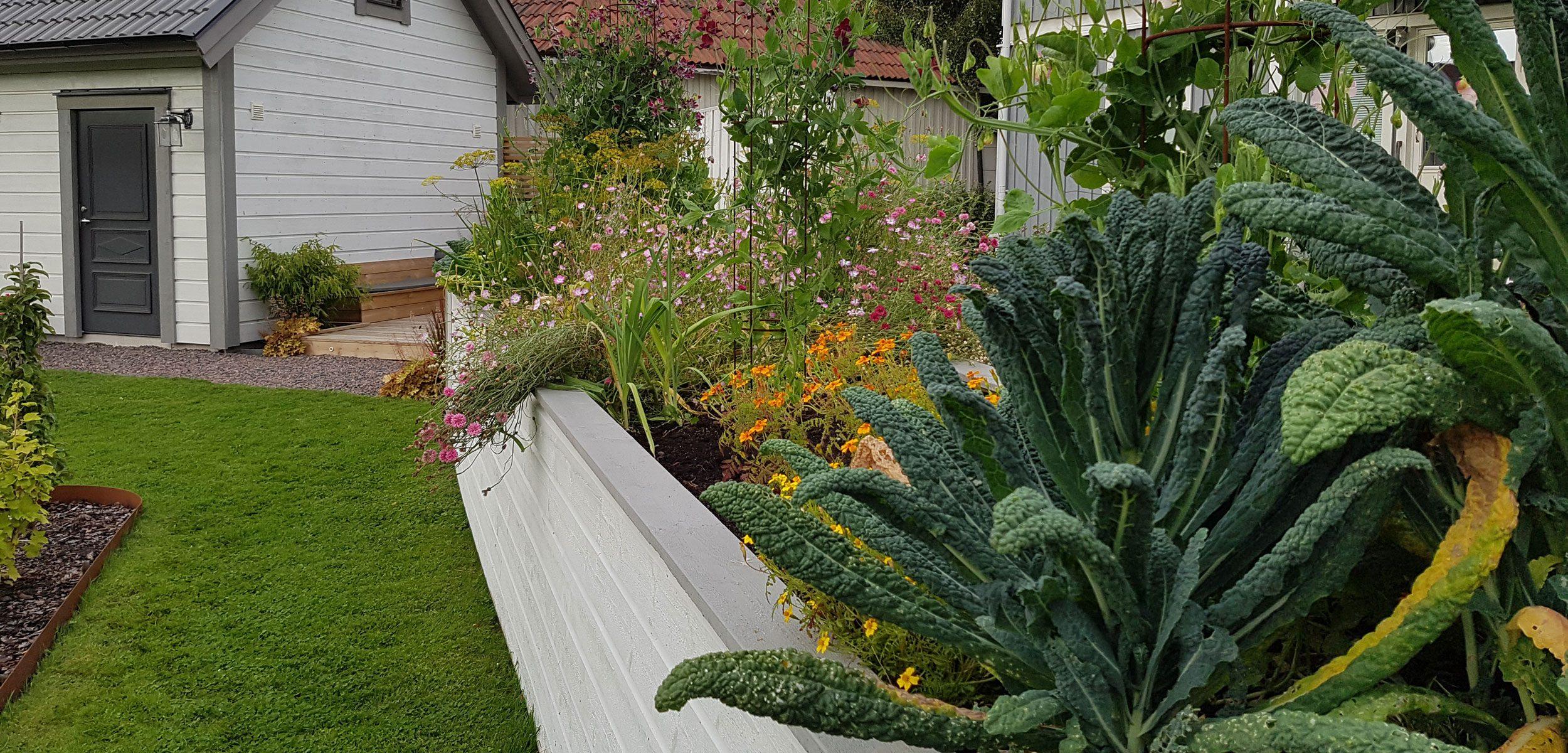 Upphöjd odlingsbädd med grönsaker.