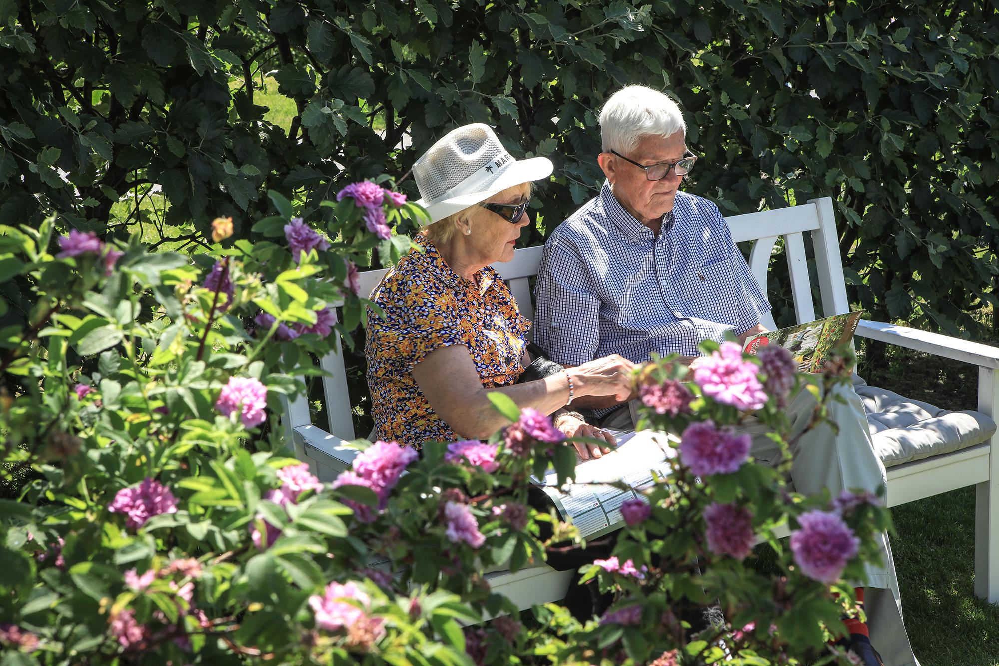 Ett par pustar ut på en trädgårdssoffa. Foto Will Rose.